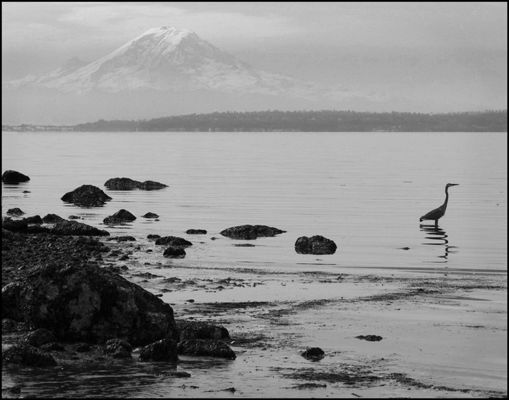 Mt. Rainier with a heron in foreground
